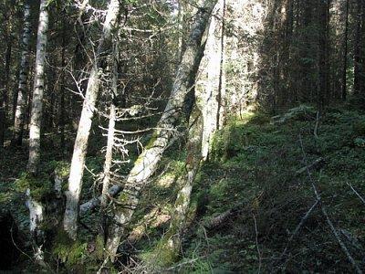 Finské lesy (nahrál: admin)