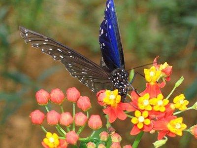 Okolí Yangzhuo - skleník s motýly 2 (nahrál: admin)