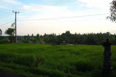 Balijská příroda (nahrál: admin)