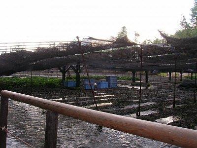 Zemědělská krajina (nahrál: admin)