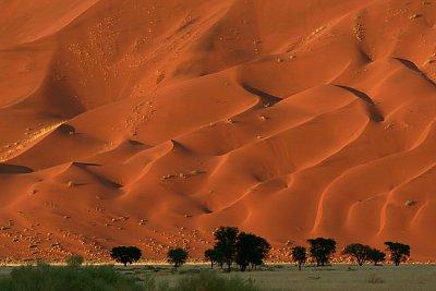 Park Namib Naukluft představuje poušť v celé její kráse (nahrál: Martina Svobodova)